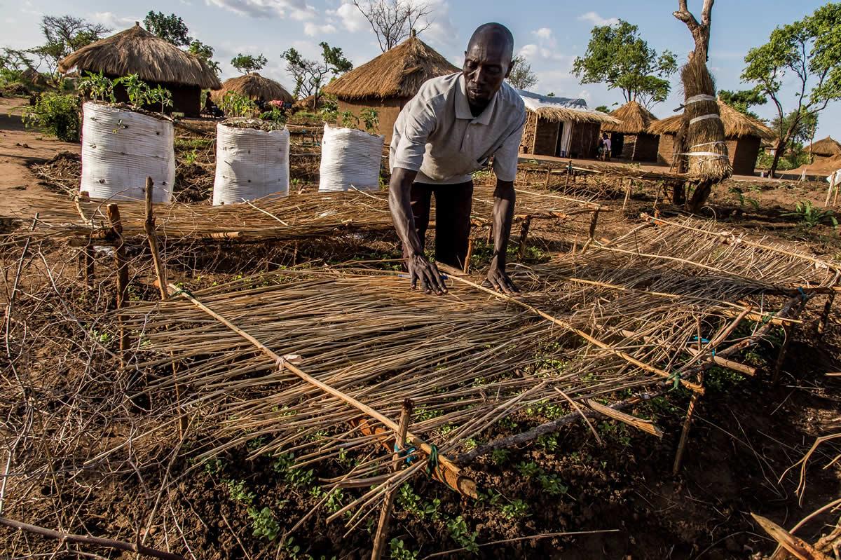 在烏干達完成登記的難民可以工作和自由活動,並獲發一幅30平方米的土地,用作建房子、種菜或其他農作物。圖為一個難民在比迪比迪難民營家前地耕種。© Frederic NOY/COSMOS